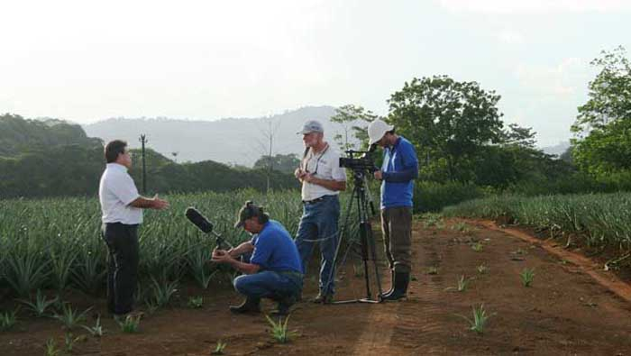Elliott Nowels interviews Luis Falcon a pineapple expert on biological control